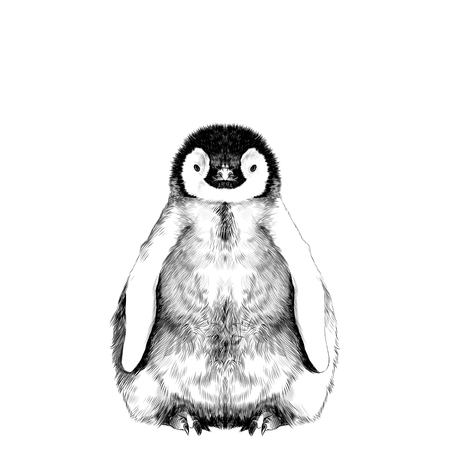 Pingwin mały i słodki jest w pełni wzrostu jest symetryczny, grafika wektorowa czarno-biały rysunek szkic