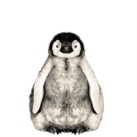 Cute baby penguin small and cute is in full growth is symmetrical, the sketch vector graphics color picture