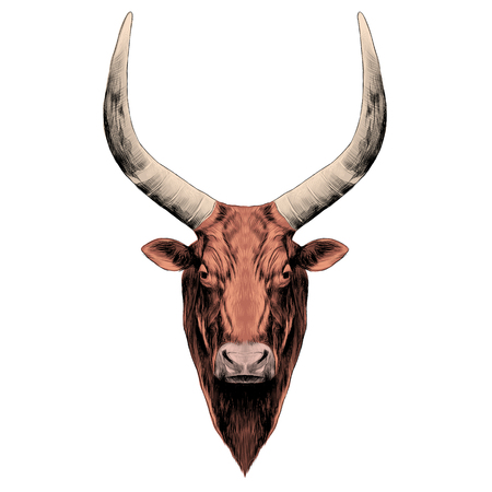 the head of a bull with large horns.