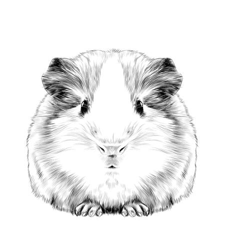 Plump niedlich Meerschweinchen, Schwarz-Weiß-Zeichnung.