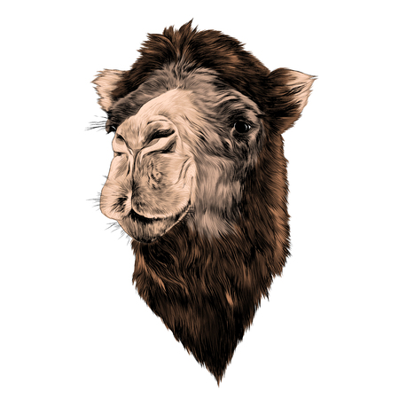head camel side profile sketch colored. Illustration