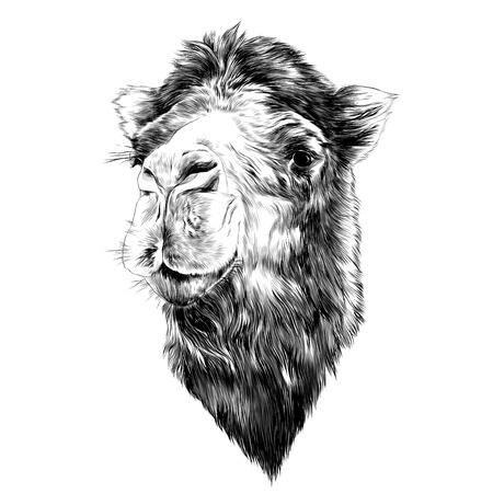 머리 낙타 측면 프로필 스케치 그래픽 흑백 드로잉