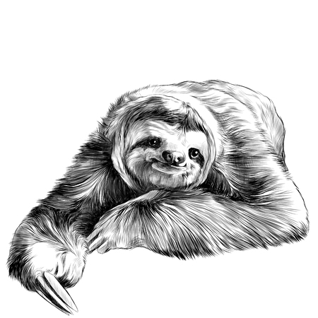 sloth lies with crossed legs, looking right and smiling sweetly, sketch vector graphics black and white drawing Vectores