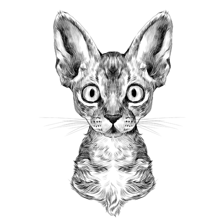 the head of a cat breed Oregon Rex symmetric, sketch vector graphics black and white drawing Illustration