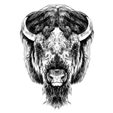 バッファローの頭、対称、右、黒と白のイメージのスケッチ ベクトル グラフィックに見える  イラスト・ベクター素材