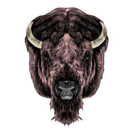 バッファローの頭、対称、右、スケッチ ベクトル グラフィック カラー写真に見える