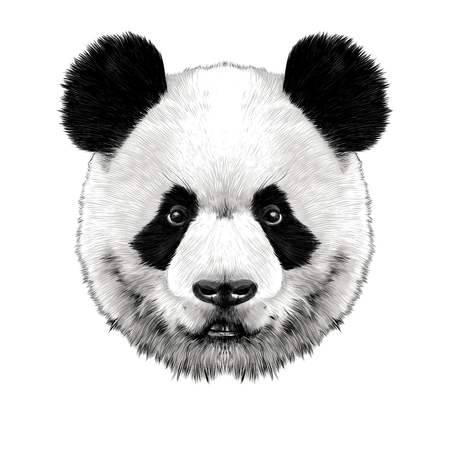 Panda head is symmetrical looks right, sketch vector graphics color picture
