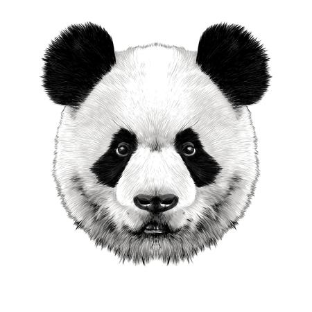 팬더 머리가 대칭 같다, 스케치 벡터 그래픽 컬러 그림