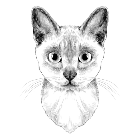 the head of a cat breed Australian mist symmetric, sketch vector graphics black and white drawing