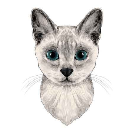 the head of a cat breed Australian mist symmetric, sketch vector graphics color picture Illustration
