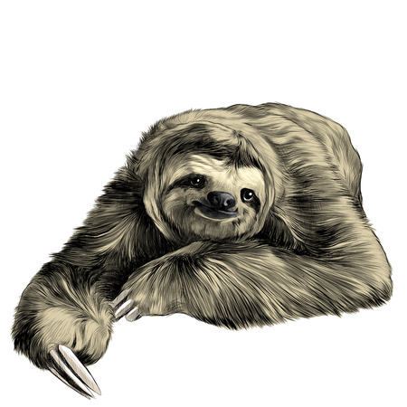 sloth lies with crossed legs, looking right and smiling sweetly, sketch vector graphics color picture