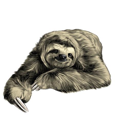 luiaard ligt met gekruiste benen, ziet er goed uit en glimlacht zoet, schets vectorafbeeldingen kleurenbeeld Stock Illustratie