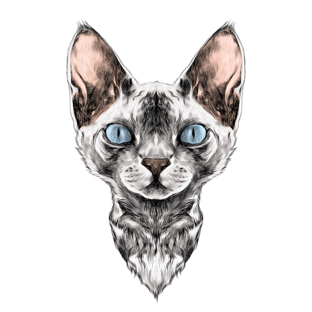 猫の品種のスフィンクスの顔スケッチ ベクトル カラー図面