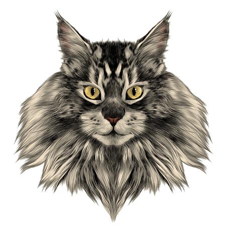 고양이 품종 메인 Coon 얼굴 스케치 벡터 색 그리기