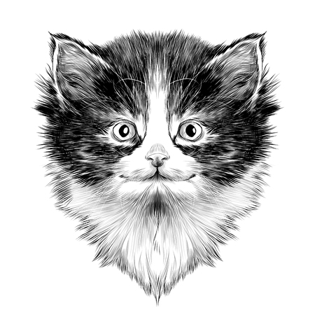 spotted fur: cat Breed Himalayan breed face sketch vector black and white drawing Illustration