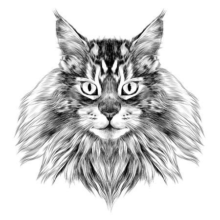 고양이 품종 메인 Coon 얼굴 스케치 벡터 흑백 드로잉