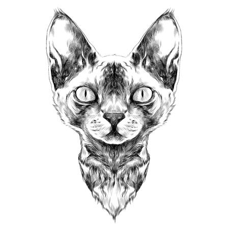 猫の品種スフィンクス顔スケッチ黒と白のベクトル描画