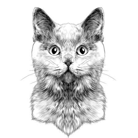 cat Breed British Shorthair face sketch vector black and white drawing Иллюстрация