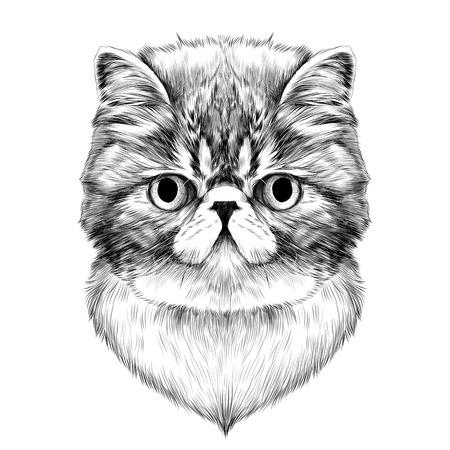 고양이 품종 이국적인 쇼트 헤어 얼굴 스케치 벡터 흑백 드로잉 일러스트