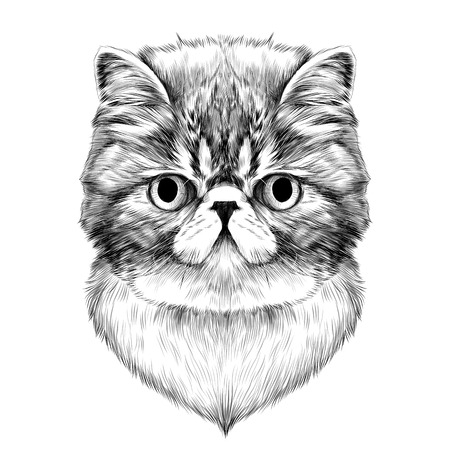 cat Breed Exotic Shorthair face sketch vector black and white drawing Illustration