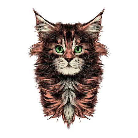 kitty baby breed Maine Coon head is symmetrical sketch vector graphics color picture Stock Illustratie
