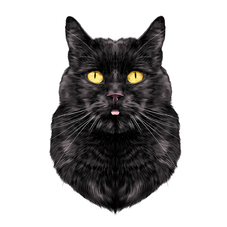 Cat breed Bombay male is the head symmetrical sketch vector graphics color picture Illustration