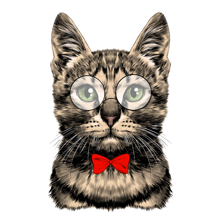 Striped cat face with glasses and red bow tie sketch vector graphics color picture