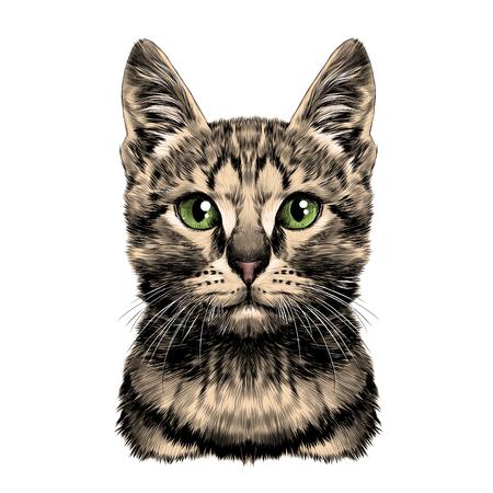 猫発見ストライプ ヘッド対称スケッチ ベクトル グラフィック カラー写真
