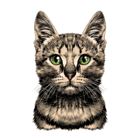 Cat spotted striped head symmetrical sketch vector graphics color picture