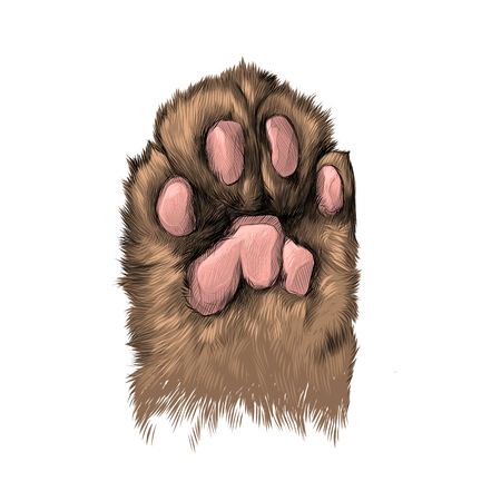 Cats paw with the pads pulled up sketch vector graphics color picture Illustration