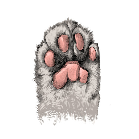 Cat's paw with the pads pulled up sketch vector graphics color picture