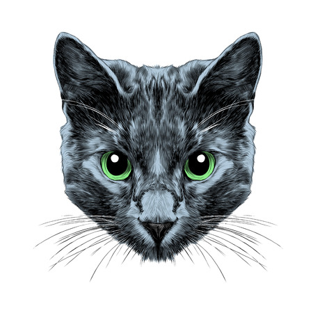 Cat breed Russian blue face sketch vector color drawing