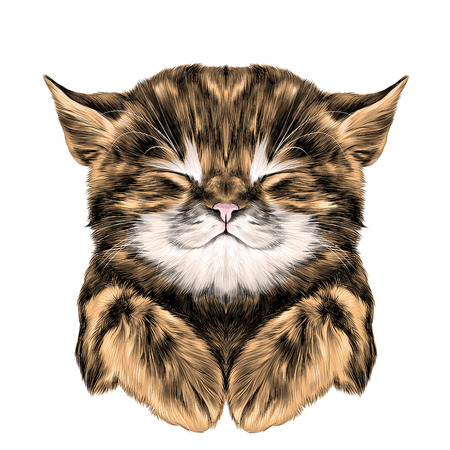 a ginger striped kitten asleep with folded legs muzzle, sketch vector graphics color picture Illustration