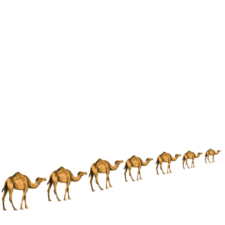 a caravan of camels in a line going away in perspective, sketch vector graphics color picture
