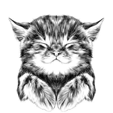 striped kitten sleeping with folded legs muzzle, sketch vector graphics black and white drawing