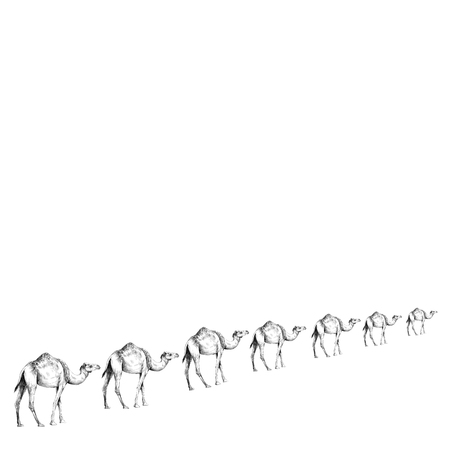 a caravan of camels in a line going away in perspective, sketch vector graphics black and white drawing Çizim