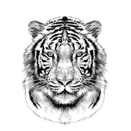 cabeza de tigre de cara completa simétrica, boceto gráficos vectoriales dibujo en blanco y negro