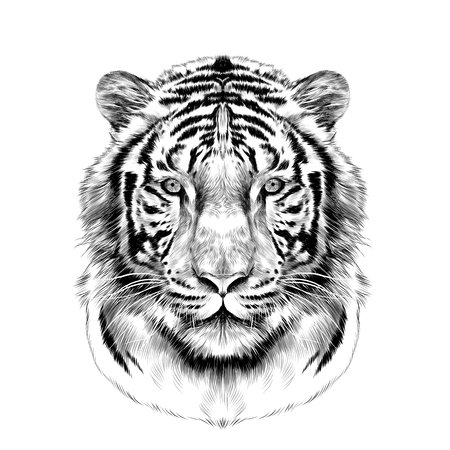 tiger head full face symmetrical, sketch vector graphics black and white drawing Ilustração