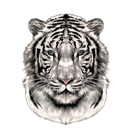 the head of the white tiger full face symmetrical, sketch vector graphics color picture Stock Illustratie