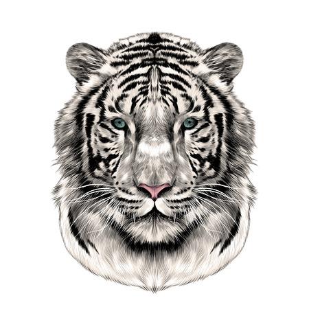 la cabeza de la cara completa del tigre blanco simétrica, imagen de color de gráficos vectoriales de boceto