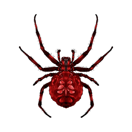 Spider with spots on the back red of the symmetric top view sketch vector graphics color picture