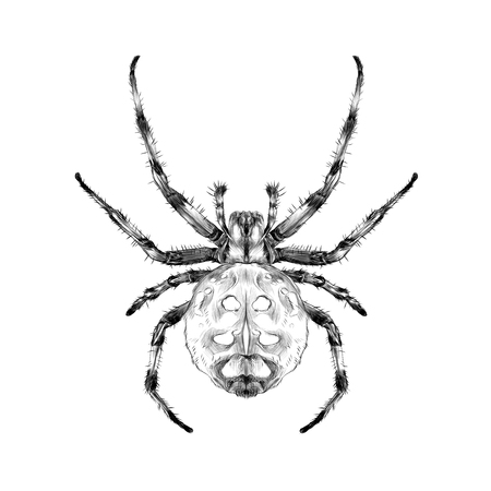 Spider with spots on the back of the symmetric top view sketch vector graphics black and white drawing