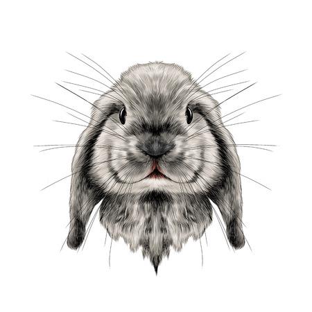 흰 토끼 전체 얼굴의 머리 대칭, 스케치 벡터 그래픽 컬러 사진 일러스트