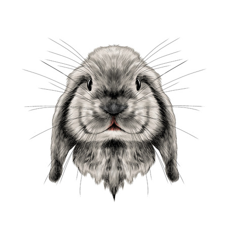 the head of the white rabbit full face symmetrical, sketch vector graphics color picture Imagens - 78550741