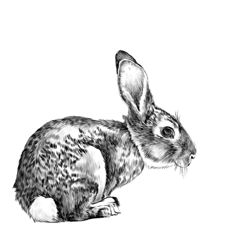 the hare in full growth sits sideways sketch vector graphics black and white drawing