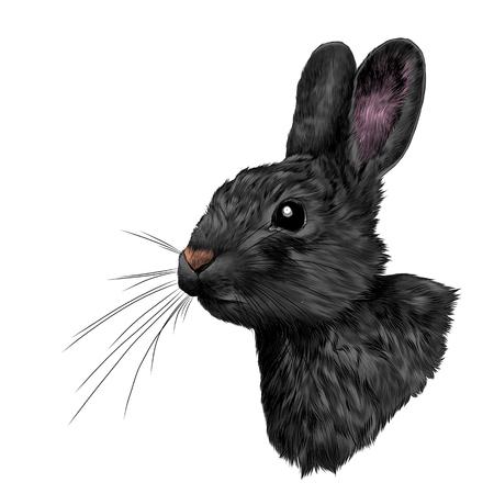 alone in the dark: head black hare in profile, sketch vector graphics color picture