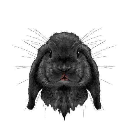 머리 검은 토끼 전체 얼굴 대칭, 스케치 벡터 그래픽 컬러 사진