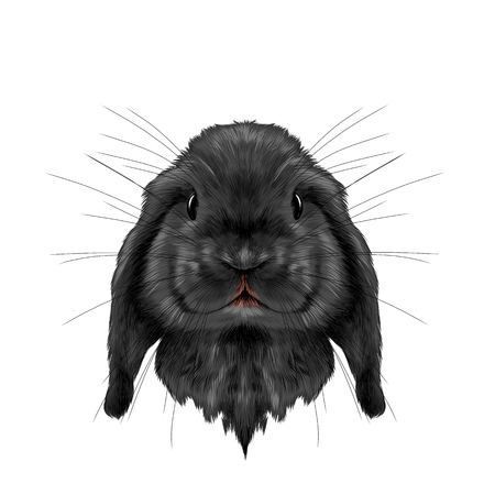 head black rabbit full face symmetrical, sketch vector graphics color picture