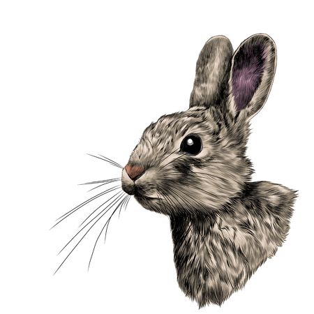 the head of the white rabbit in profile, sketch vector graphics color picture