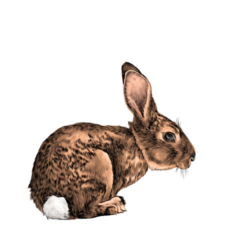 brown hare in full growth sits sideways sketch vector graphics color picture